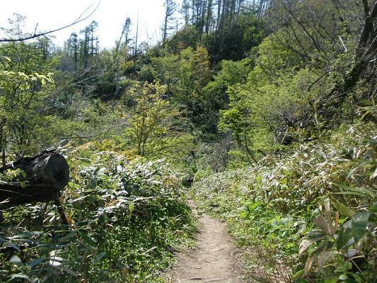 2010.05.29藻岩山登山 006.jpg