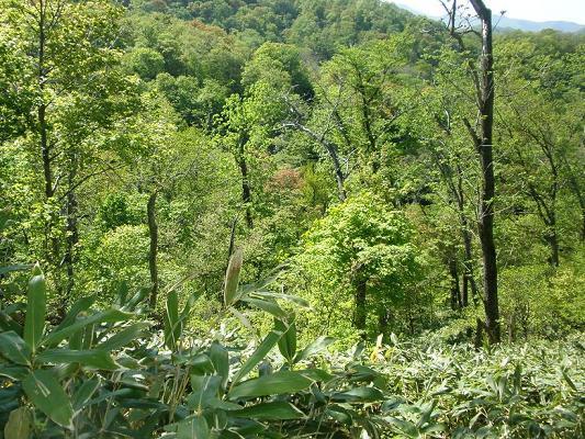 2010.05.29藻岩山登山 223.jpg