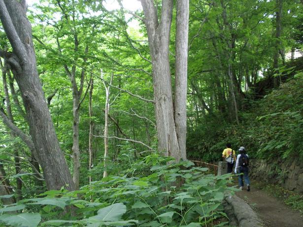 2010.07.04 定山渓朝日岳登山 010.jpg