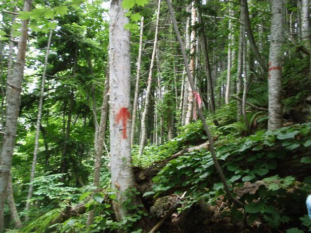2010.07.04 定山渓朝日岳登山 039.jpg