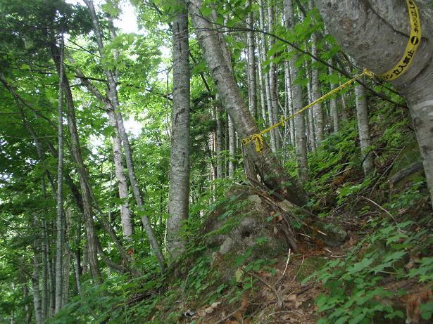2010.07.04 定山渓朝日岳登山 040.jpg