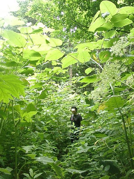 2010.07.04 定山渓朝日岳登山 058.jpg