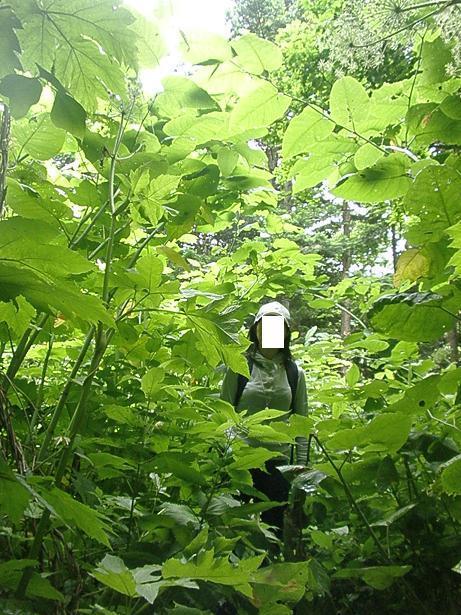 2010.07.04 定山渓朝日岳登山 059.jpg