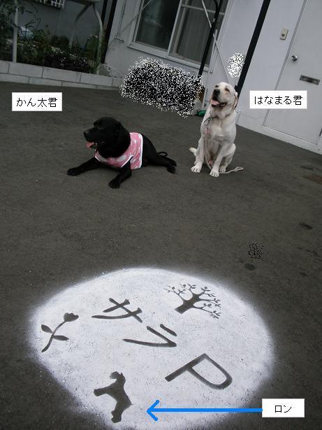 2010.08.29 ロンの友達・はなまる&かん太 12.jpg