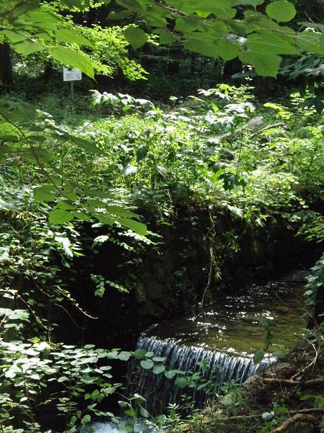 2010.08.29 清らかな水路 10.jpg