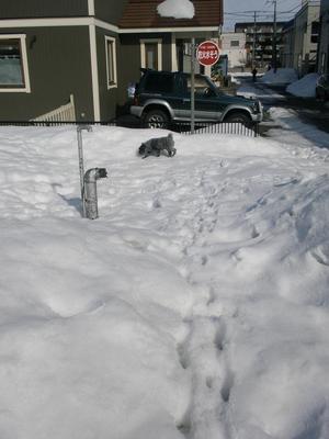 公園の雪 10.jpg
