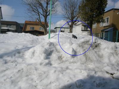 公園の雪 8.jpg
