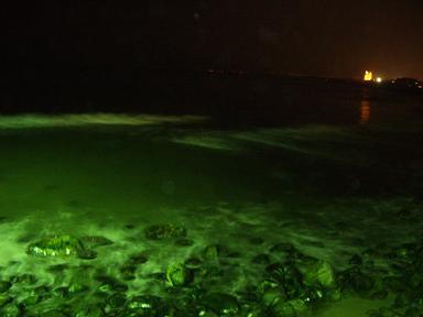 夜の海 055.jpg