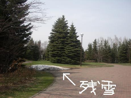 残雪1-5 006.jpg