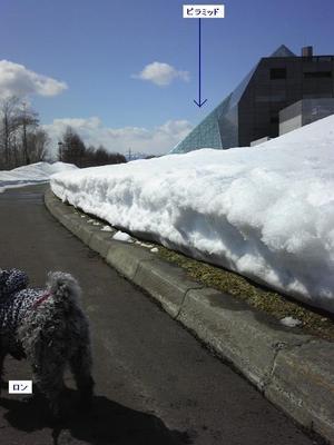 雪の下から芝生が 1.jpg