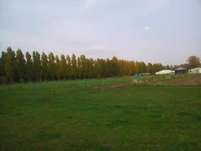 9北大ポプラ並木.JPG