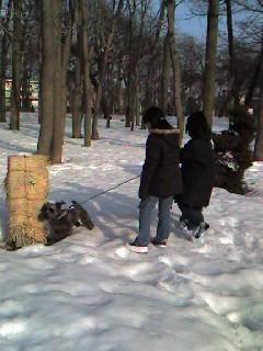 080318冬囲いの公園.jpg