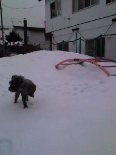 ロンと雪山.JPG