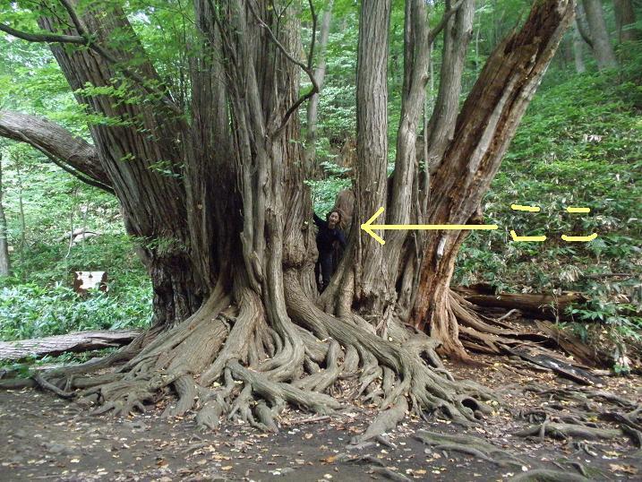 円山の巨木 11.JPG