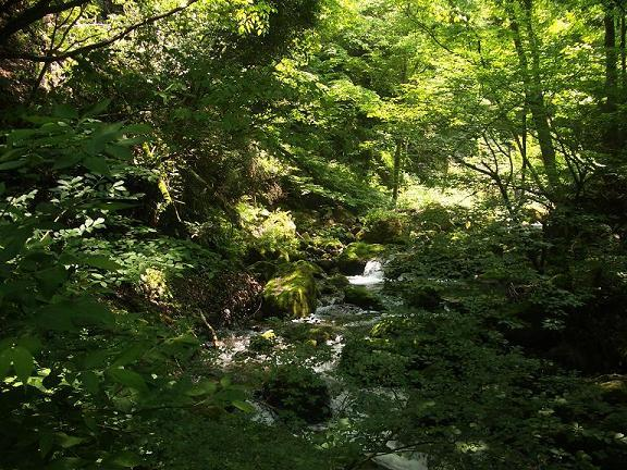 森林と川のせせらぎ 1-1.jpg