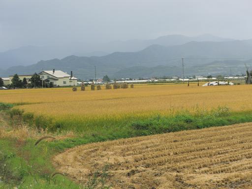 稲刈り②.jpg