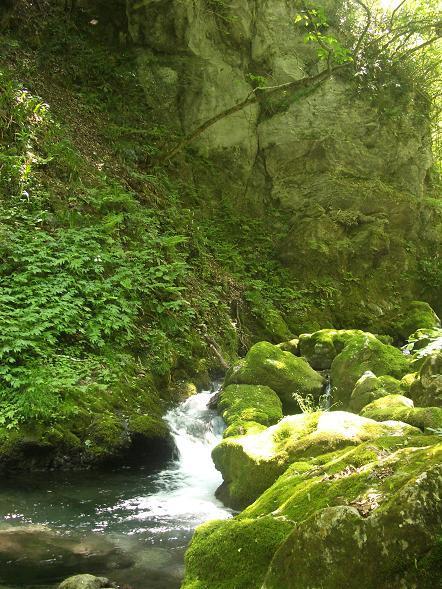 苔で一面が緑に染まった川原 1-2.jpg