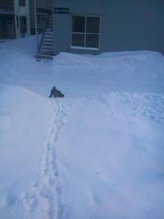 雪の山 006.jpg
