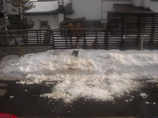 雪投げ070.jpg