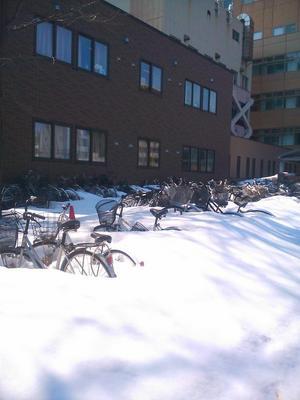 1雪の中から自転車が.jpg